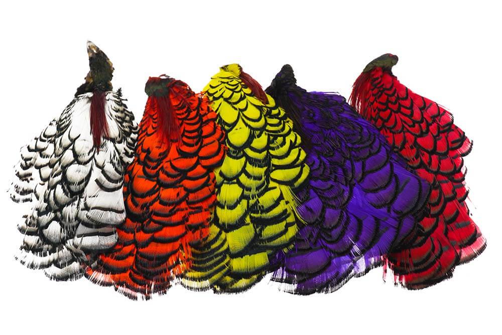 Armherst Pheasant