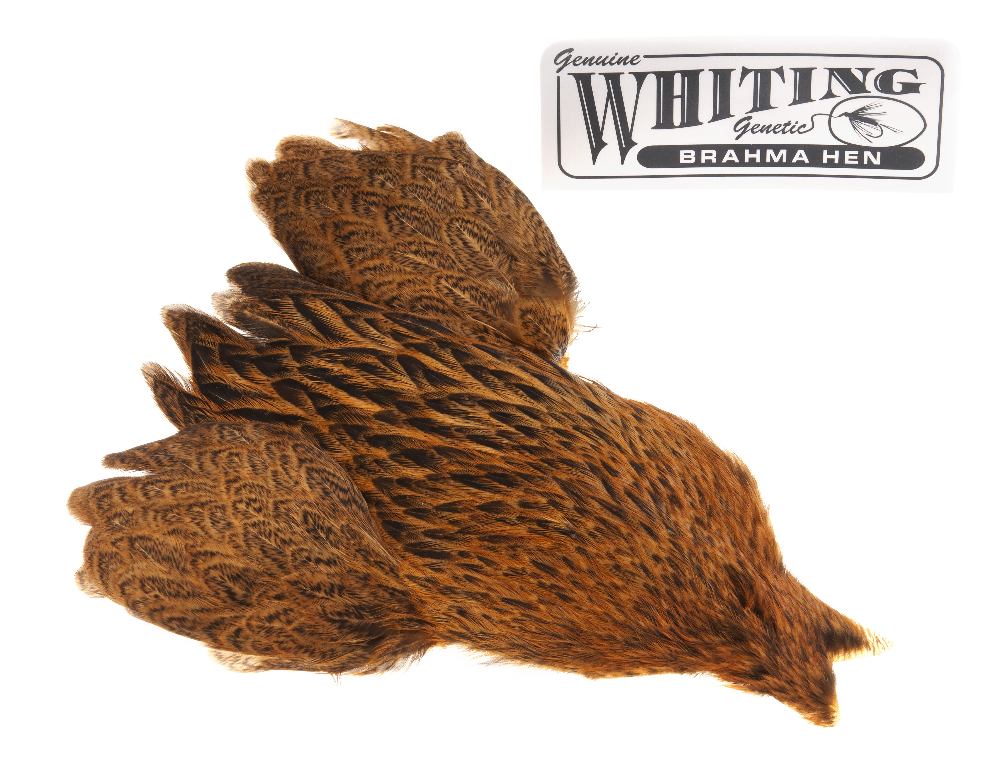 Whiting Brahma - March Brown